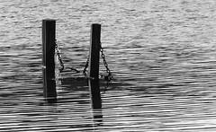 Solo diventando niente si pu diventare scrittori (Roby1kenobi) Tags: lake ice lago pond nikon d2x icy ghiaccio ghiacciato roby1kenobi robertomignanego