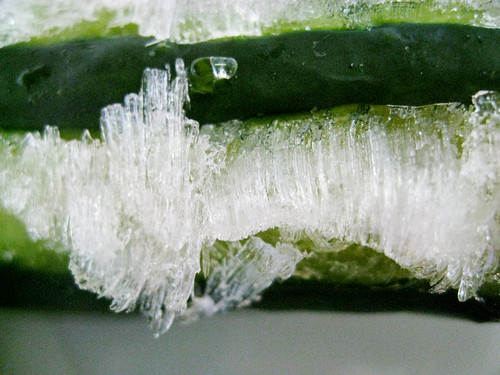 Frozen Cucumber
