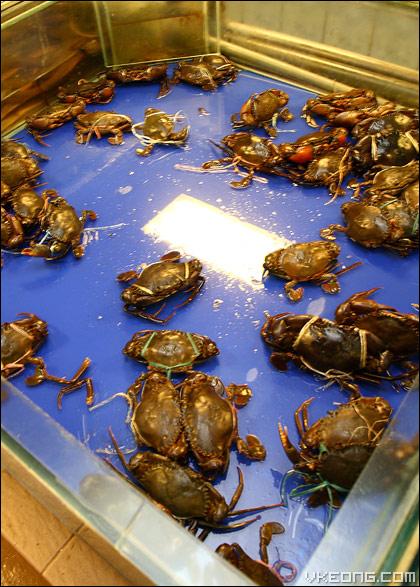 live-mud-crabs