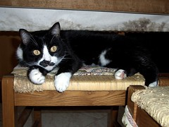 the cat is under the table XD (wildstray) Tags: cat lilla