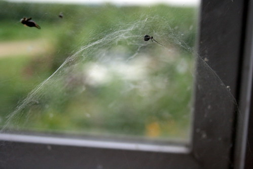 Attleson Farm: Crazy Spider Web
