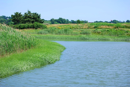 salt water marsh 1