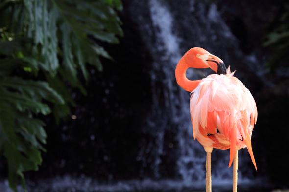080109_flamingo