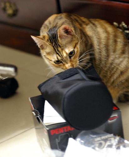 新手試貼: 識貨的貓^.^ + 識貨的貓 PART 2 FA 77MM Limited