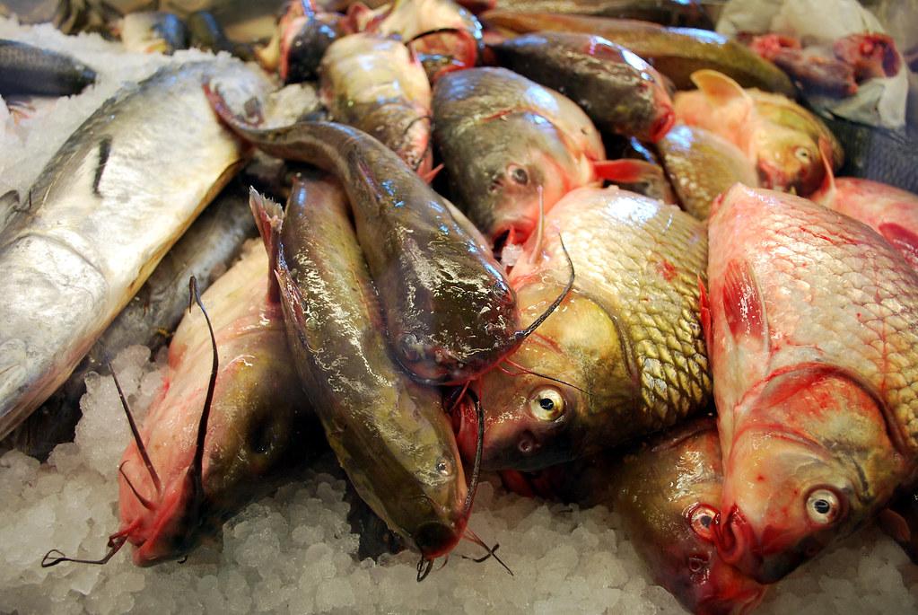 WSM Fishies