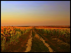 Sunflower Fields (JoannaRB2009) Tags: sunset sky sun mountains nature field hungary colours village path natura hills valley sunflowers fields breathtaking niebo zachdsoca wgry soneczniki bogacz cieka colorphotoaward breathtakinggoldaward breathtakinghalloffame bogasc thebukkmountains