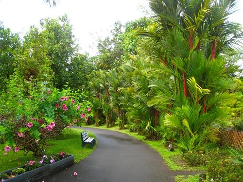 Walkway through the zoo