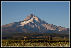 Mt Hood Orchard (jpeder55) Tags: oregon canon mthood mounthood hoodriver orchards naturephotography cooperspur landscapephotography