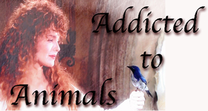 Addicted to Animals