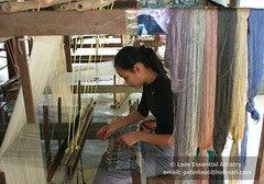 Laos Weaving Photo043 (Laos Essential Artistry) Tags: silk textiles laos weaving handwoven looms laotextiles