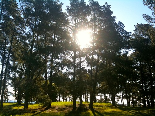 Sunshine in the pines