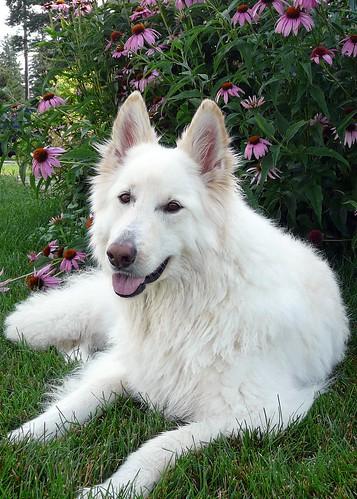 Misty: Best Dog Ever!