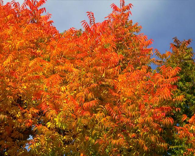 Oakhurst Autumn 3