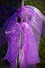 A Purple Ribbon