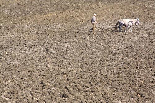 Agriculture near Larache, Morocco.