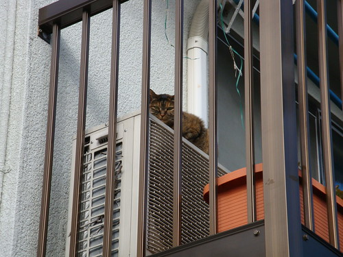 Today's Cat@20091209