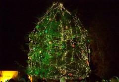 Burlingame Christmas Tree Lighting