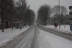 Kastanjelaan Enkhuizen (deniche8) Tags: winter 2009 enkhuizen ijsselmeer