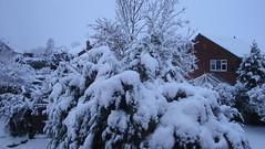 DSC03951 (edwardsgt) Tags: snow december tring 2009