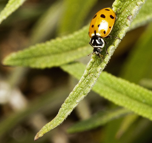 Day 133/365: Ladybug