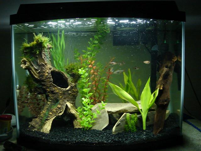 10 gallon fish tank stocking options