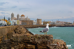Cádiz (DGM Fotografía) Tags: cadiz cádiz gadir gades españa spain sea mar landscape paisaje blue azul sky cielo cloud cloudy nubes nublado seagull gaviota bird pajaro
