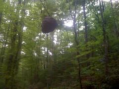 31 - Wasp Nest