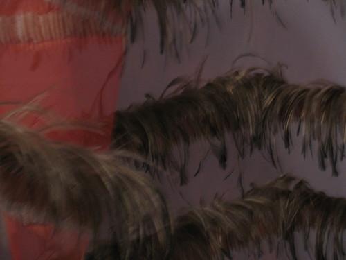 chiffon & feathers