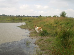 am Teich2 (manopet) Tags: dog collie hund mano meldorf torja