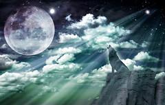 [フリー画像] グラフィックス, フォトアート, 月, 狼・オオカミ, 201007012300