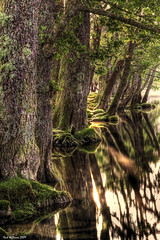 Sunlight and Shadows (Shuggie!!) Tags: trees reflection water reflections landscape scotland williams karl loch trossachs hdr ard aberfoyle theunforgettablepictures alemdagqualityonlyclub karlwilliams magicunicornverybest newgoldenseal