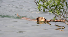 emmuccia e lo stuzzicadenti (epimik) Tags: dog emma canina bilancino stuzzicadenti legnetto emmuccia bagnetti