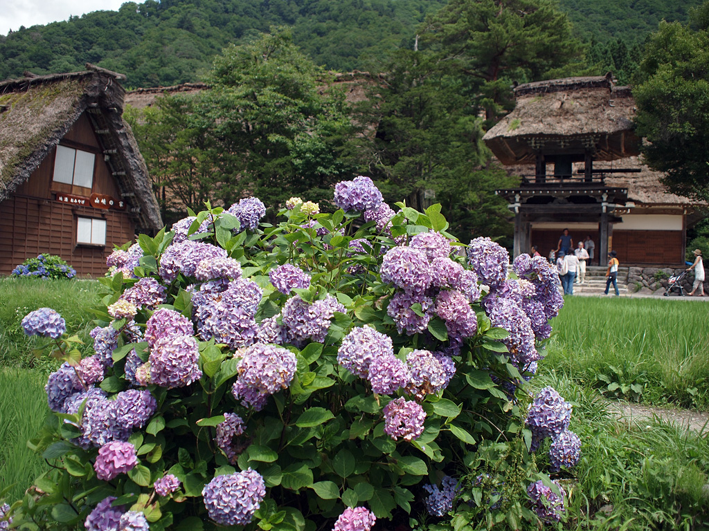 Shirakawa-go Historic Village by E-P1 (2)