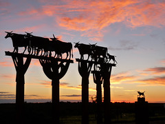 Droving_public art south of Hay (Boobook48) Tags: sunset dog clouds evening cattle nsw publicart droving abigfave tbacg
