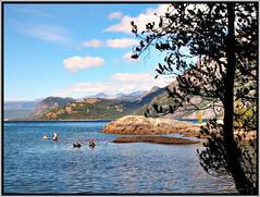 Lacar querido. (Crisfer) Tags: patagonia argentina lago agua nubes sur troncos montaas piedras sanmartndelosandes lcar crisfer