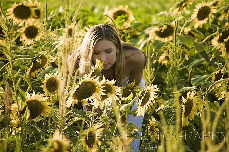 N Sunflower Field
