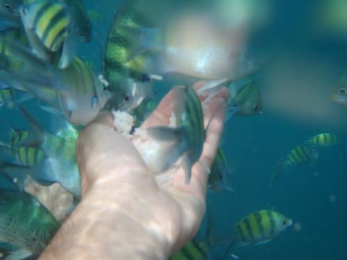 Alimentando a los peces tailandeses