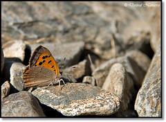 Butterfly. (Desire Navarro) Tags: canon butterfly desi mariposa barrancohondo especie canoneos400d