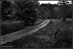Itasca State Park (Sri Dhanush) Tags: statepark park blackandwhite bw usa grass minnesota bike bicycle blackwhite scenic bikes trail 1855mm lush mn cycles itasca biketrail itascastatepark d40 nikond40