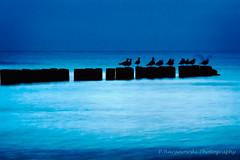 Baltic - after the sunset (1) (© Pawel Baranowski) Tags: longexposure bird animals landscape balticsea baltic ef70200f4l ptaki bałtyk zwierzaki krajobraz canoneos30d canonef70200f4lusm canon70200mmf4usmnonis zdjęcianocne dslrcanon30d winnerbc