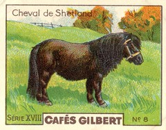 gilbert chevaux001