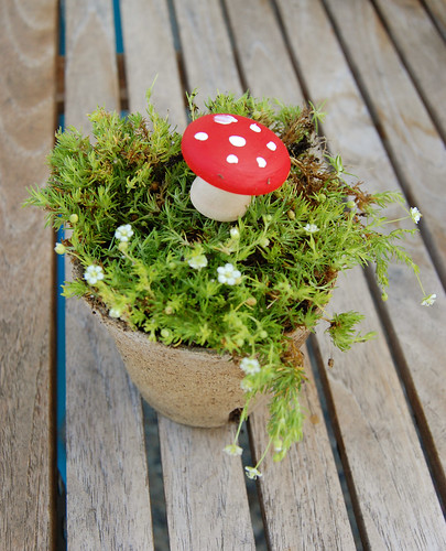 Make your own Magical Toadstools
