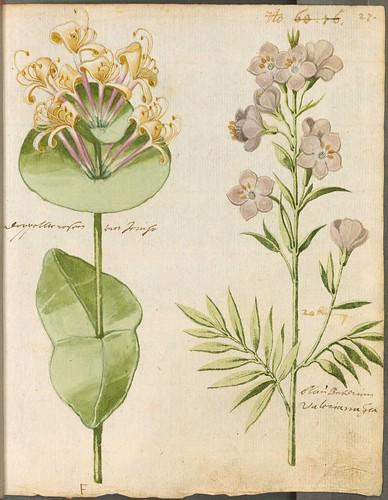 Hortulus Monheimensis 00065