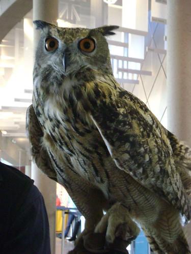 2009_tacoma_owls005