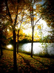 Autumn pond (f l a m i n g o) Tags: trees light sunset shadow orange color reflection water leaves yellow leaf pond shine low sparkle tall rays