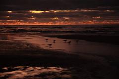 Autumn sunset shade (rotor.com) Tags: sunset holland beach netherlands dutch canon zandvoort nanlohy northholland rotorcom