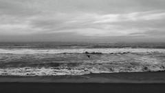 seagull (volvidejapon) Tags: ocean chile travel sea blackandwhite costa blancoynegro beach southamerica work mar agua october via pacific playa cielo flavio 2009 sudamerica viadelmar sudamrica allrightsreserved volvidejapon todoslosderechosreservados volvidejapon volvidejapon
