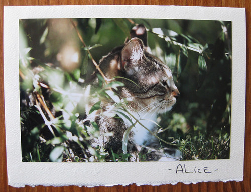 Alice the cat, photo card