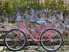a menina do muro (ccarriconde) Tags: muro brasil paraty parati bicicleta ccarriconde cristinacarriconde paratii copyright©cristinacarricondeallrightsreserved ©cristinacarriconde