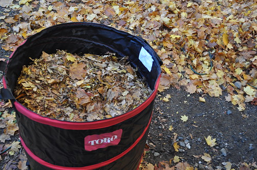 Leaves Mulched
